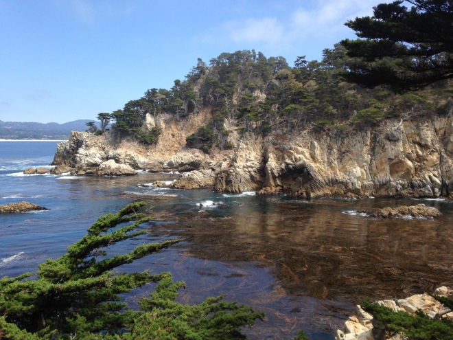 point lobos nature